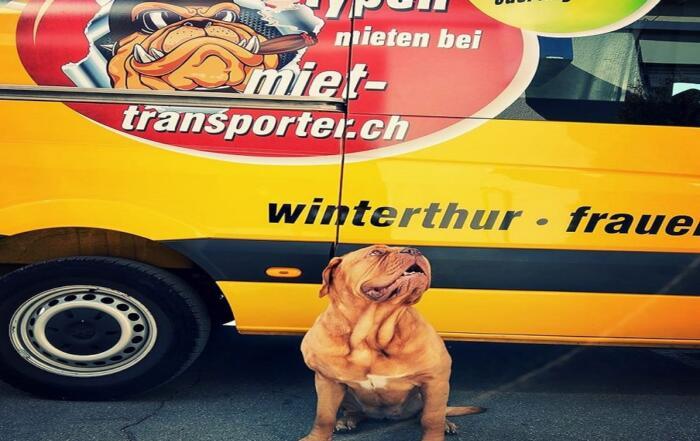 Transporter mit Hund-min
